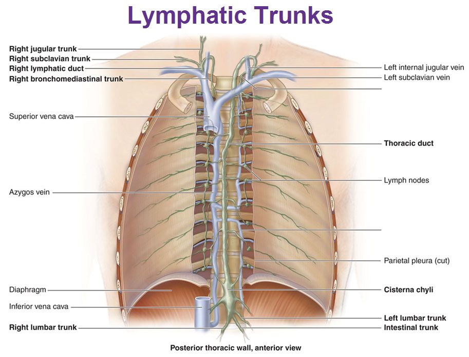lymphatic system in body - Bing Images | Health | Pinterest ...