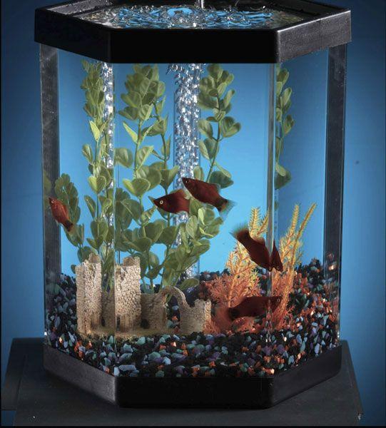 Fish bowl and small tank maintenance 4 gallon tank for Small fish tanks