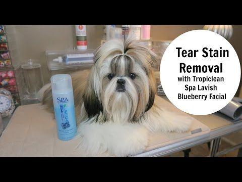 Tear Stain Removal Spa Lavish Facial Tear Stain Removal Tear Stains Stain Remover