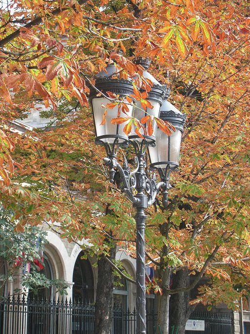 Lamp post near Notre Dame, Paris.