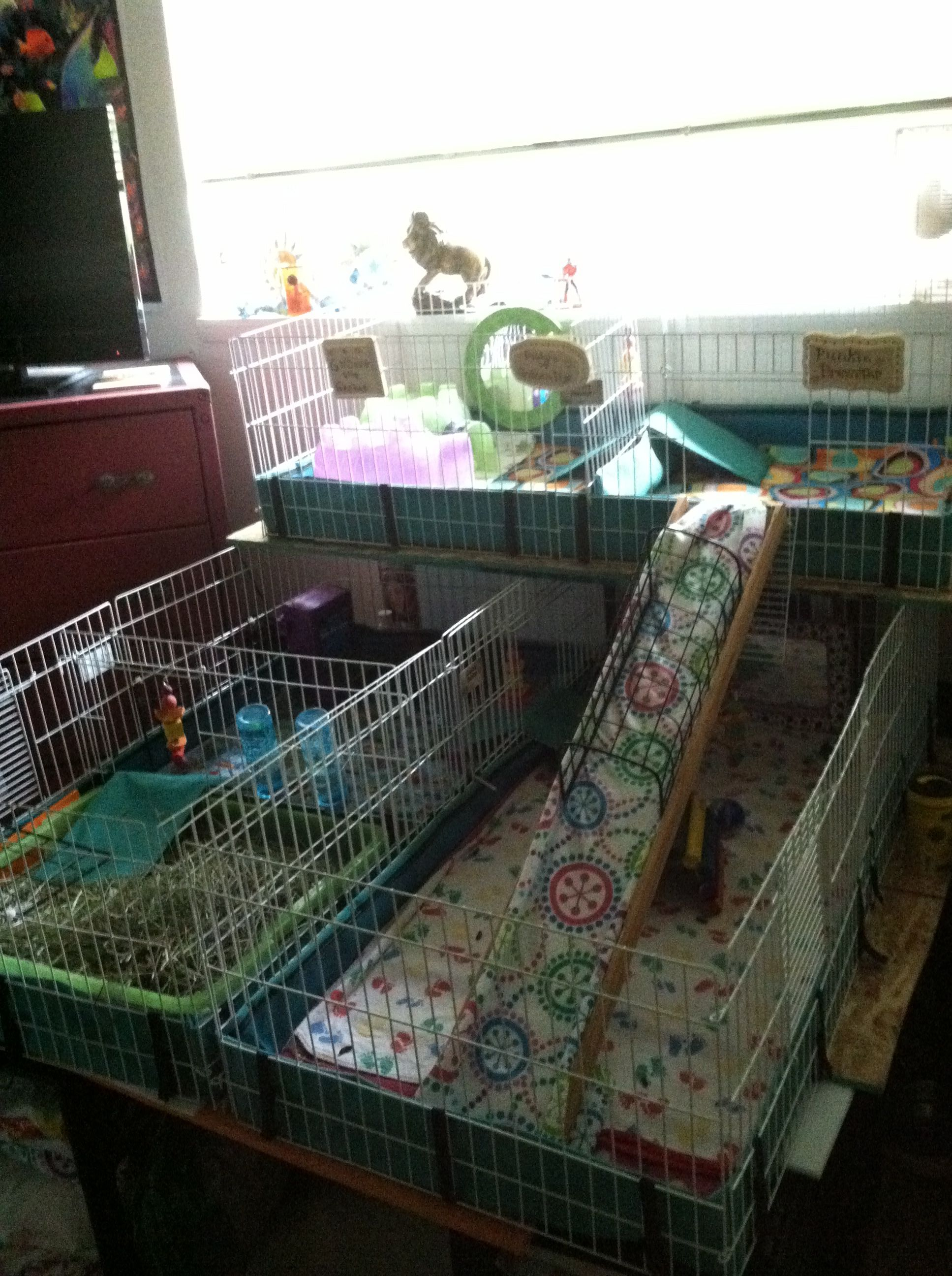 I Used 3 Midwest Guinea Pig Habitat To Make A Home For
