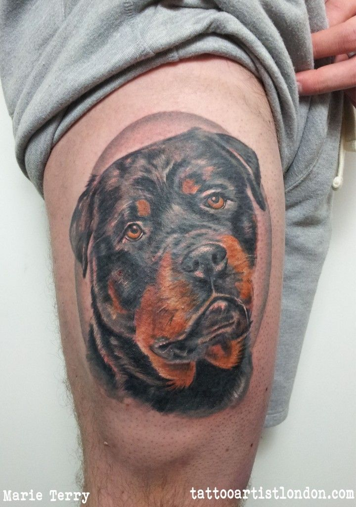 Rottweiler Tattoo By Marie Terry From London Uk Professional
