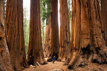"Visit the ""Land of Giants"" and admire nature - just outside of Fresno, CA"