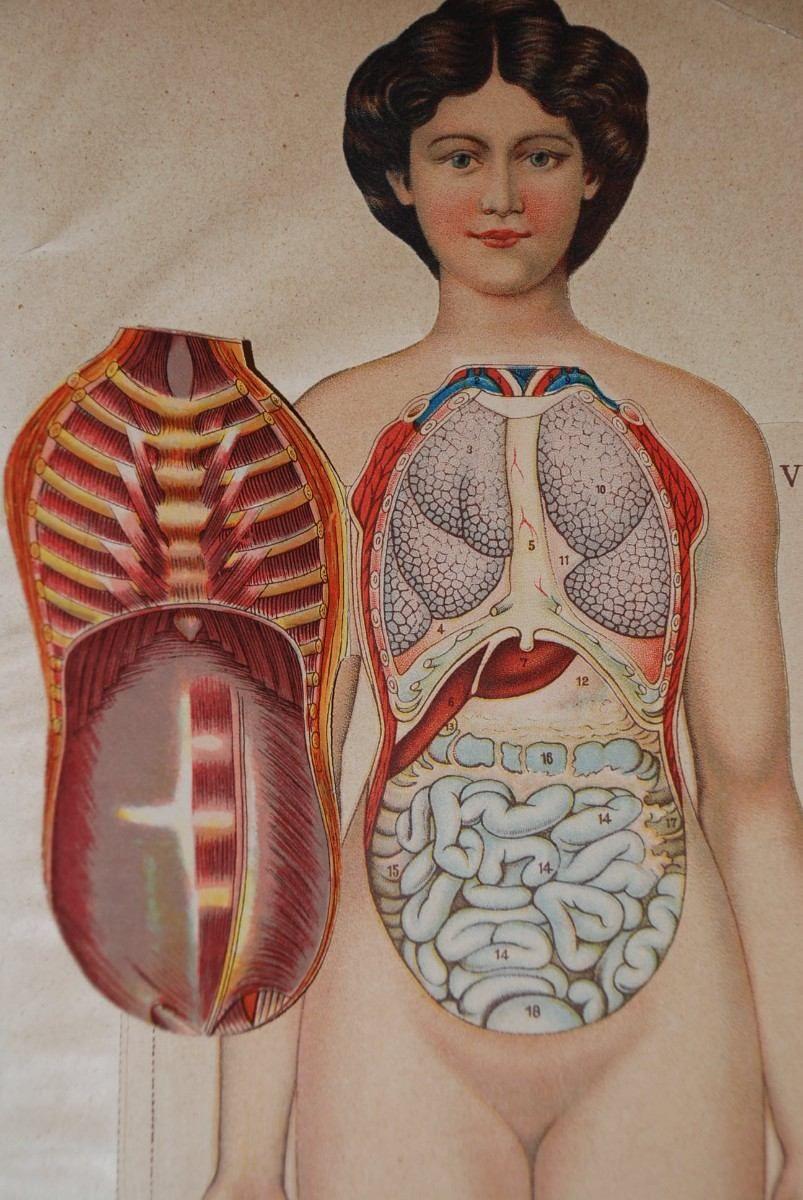 antigua-anatomia-de-la-mujer-laminas-medicina-humana-1840_MLC-F ...