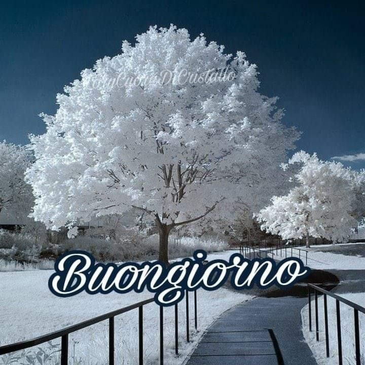 Foto Buongiorno Con La Neve.Le Migliori 500 Immagini Su Buongiorno Neve Nel 2020 Buongiorno Buongiorno Immagini Immagini