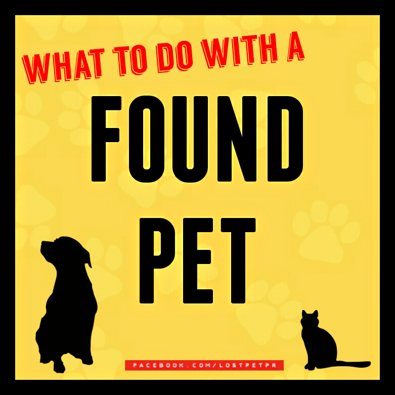 Know What To Do If You Find A Stray Pet It Is Quite Possibly Someone S Family Member And As Such It Is Not Yours To Sell Keep G Losing A Pet
