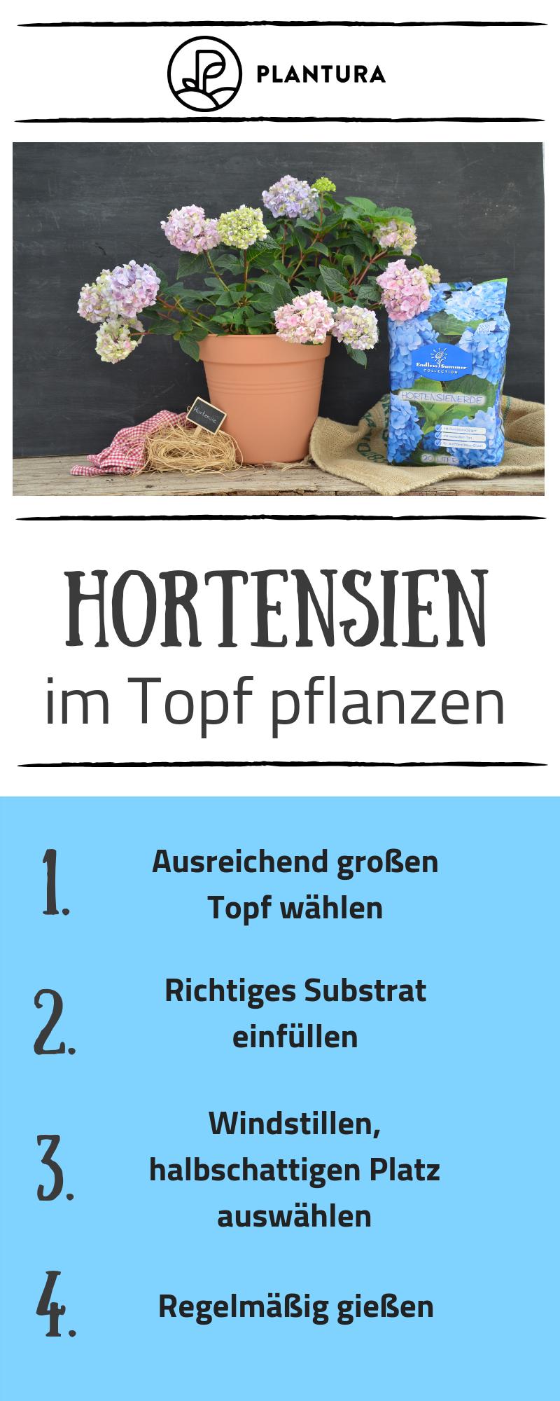 Hortensien Expertentipps Zum Pflanzen Pflegen Schneiden Pflanzen Hortensien Hortensien Garten