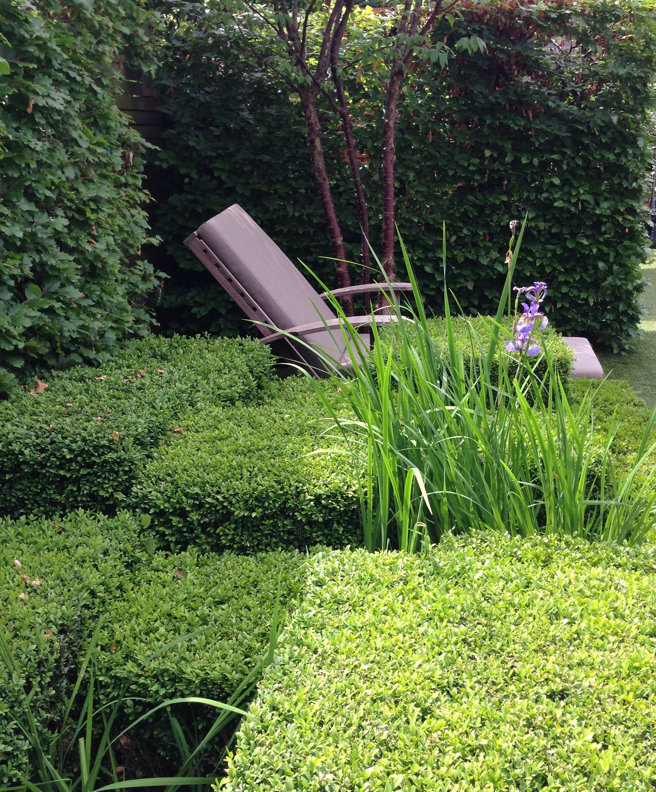 various cubes sizes of buxus sempervirens planted to created