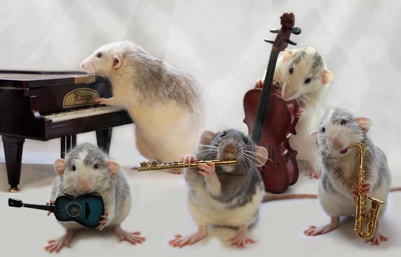 The Mousie Band