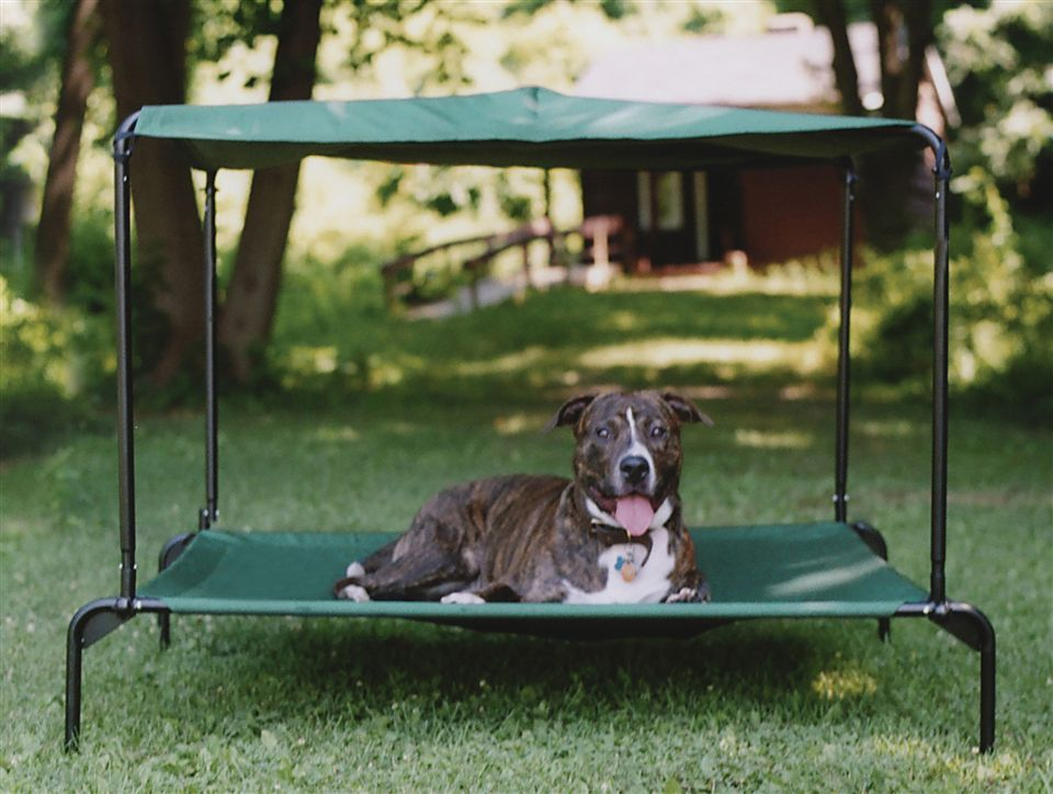 Outdoor Large Dog Bed w Canopy - Raised | Pellos | Pinterest | Large ...
