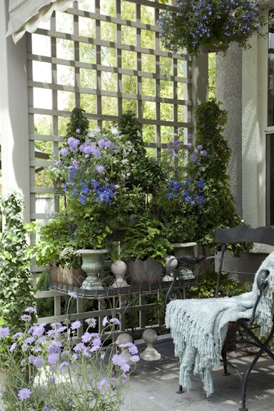 Beautiful outdoor sitting space created in the corner by using square lattice as a wall, then adding wonderful plants, table, seating.