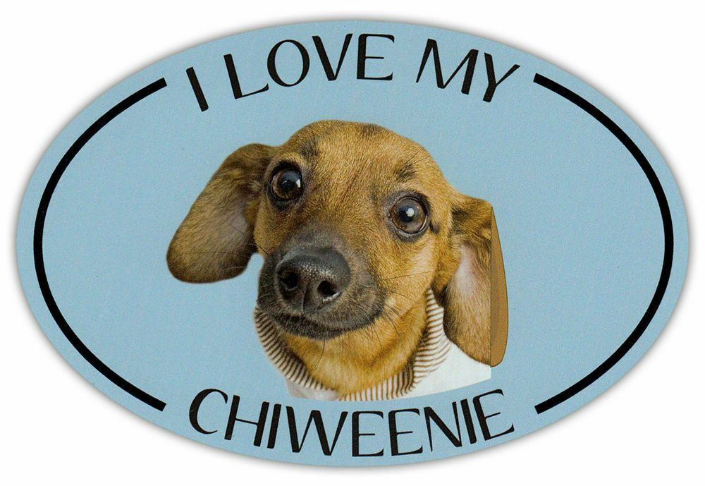 Refrigerators More I Love My Scottish TerrierFor Cars Dog Bone Magnet