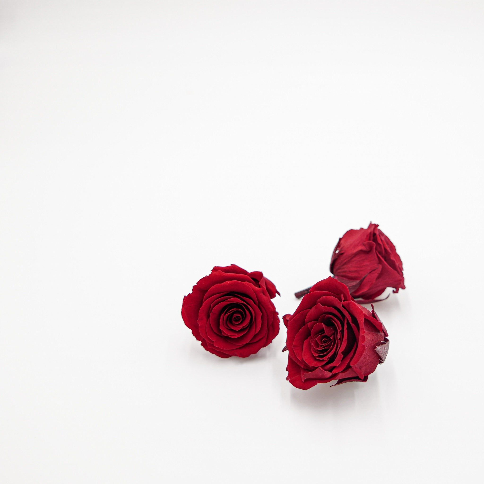 Preserved Flower Rose Kanon M Wine Red Etsy How To Preserve Flowers Red Roses Wallpaper Wallpaper Nature Flowers