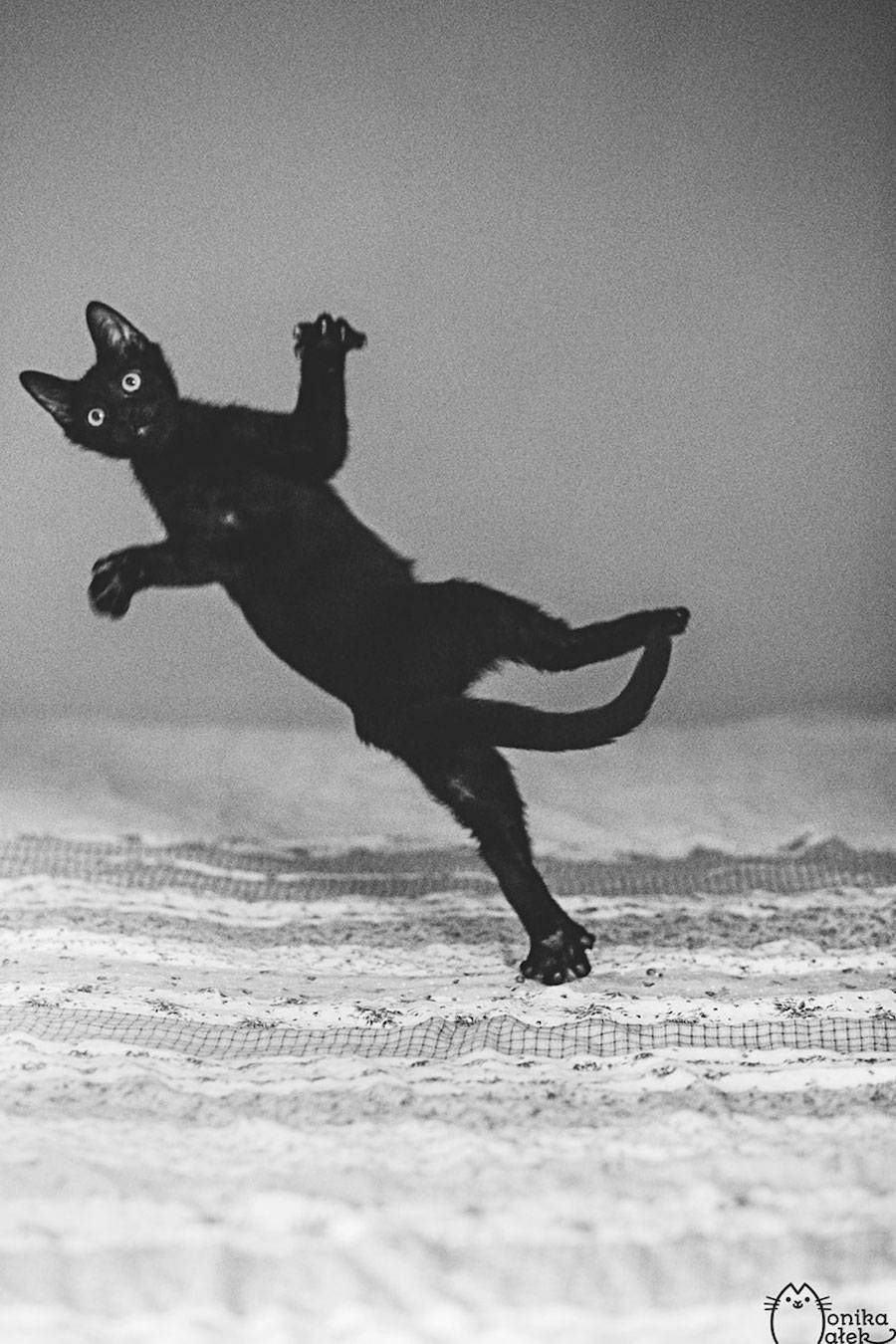 Lovely Pictures of Cats in Black and White – Fubiz Media