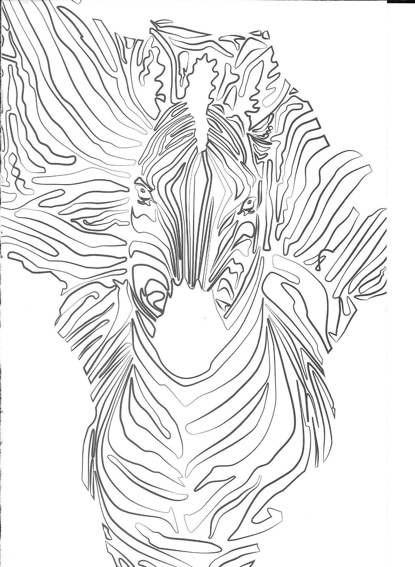 malvorlagen coloringpages zebra with images  zebra