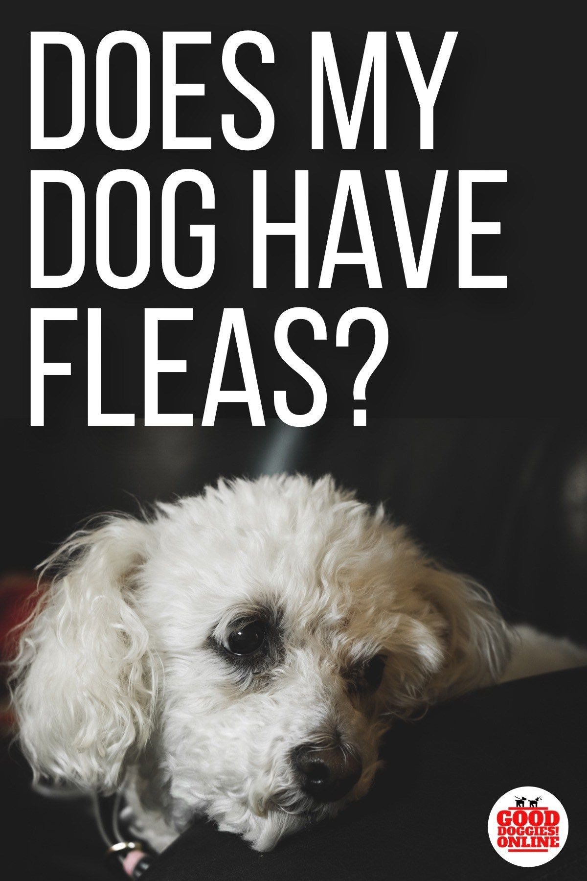 Does my dog have fleas 5 signs to know it training your