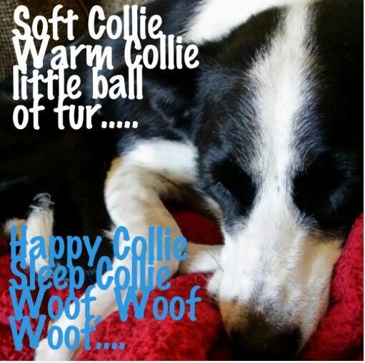 Pin By Laura Beth Dawson On Border Collies World Cutest Dog Border Collie Border Collie Dog