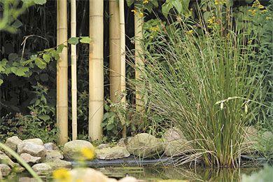 Bambusrohre Balkon Sichtschutz Sicht Und Rohre