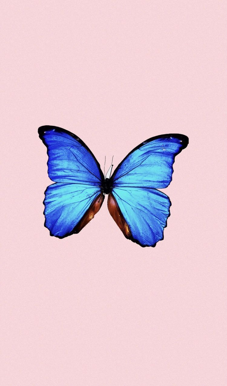 Aesthetic Blue Butterfly Wallpaper With Quotes