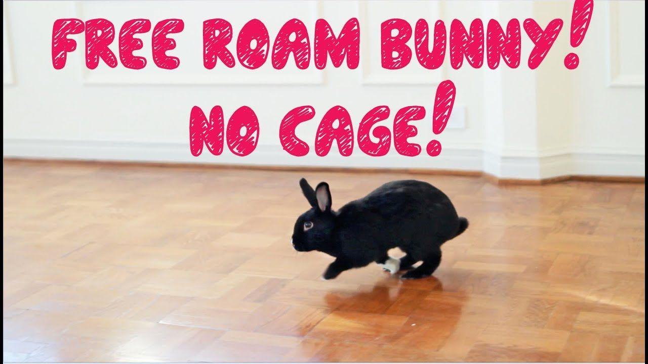 How to free roam your rabbit bunny litter box rabbit roam