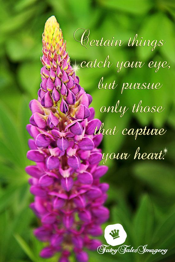 Purple Quote Inspirational Photography Lupin Floral