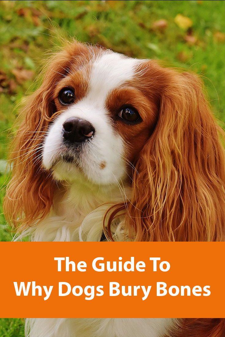 Why Do Dogs Bury Bones?   Dogs, Dog behavior, Dog lovers