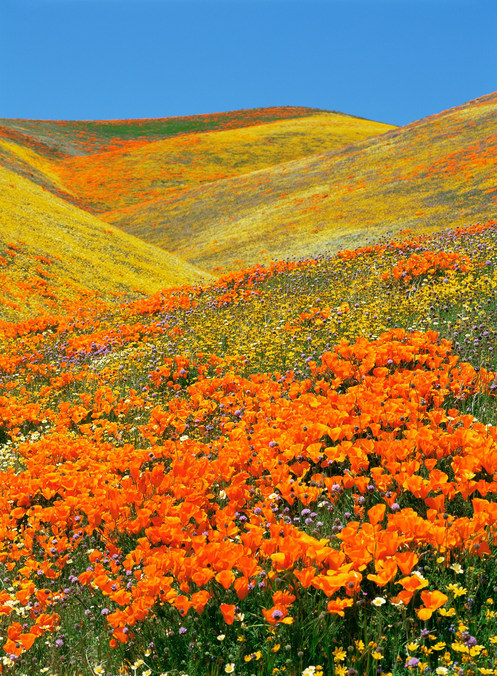 Gallery 14 Destinations to Visit and See Gorgeous Spring Flowers is free HD wallpaper.