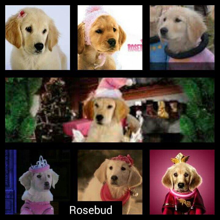 Disney Buddies Rosebud Collage I Love Rosebud With Images