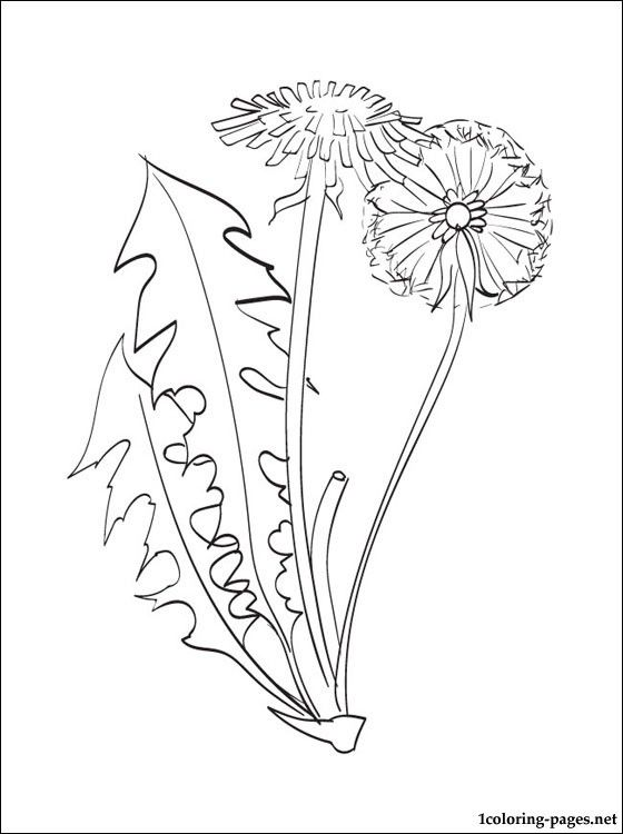 Dandelion Coloring Page Coloring Pages Dandelion Drawing