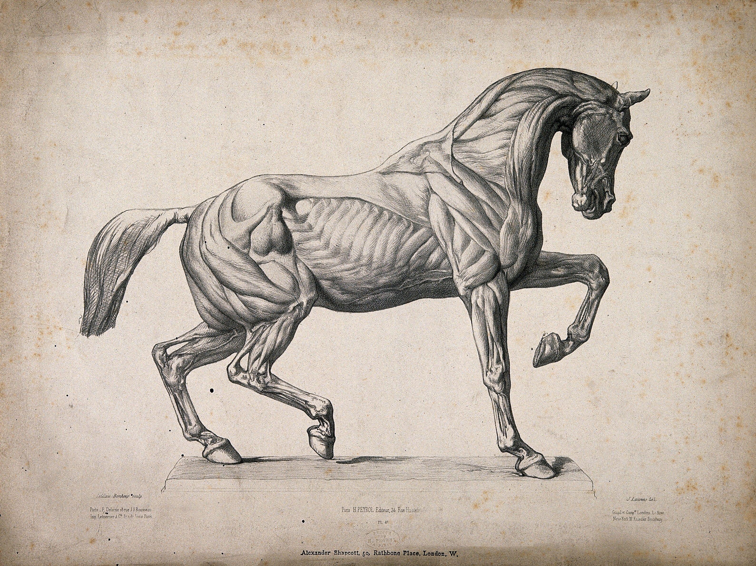 Horse Anatomy Google Search Horse Pinterest Horse Anatomy
