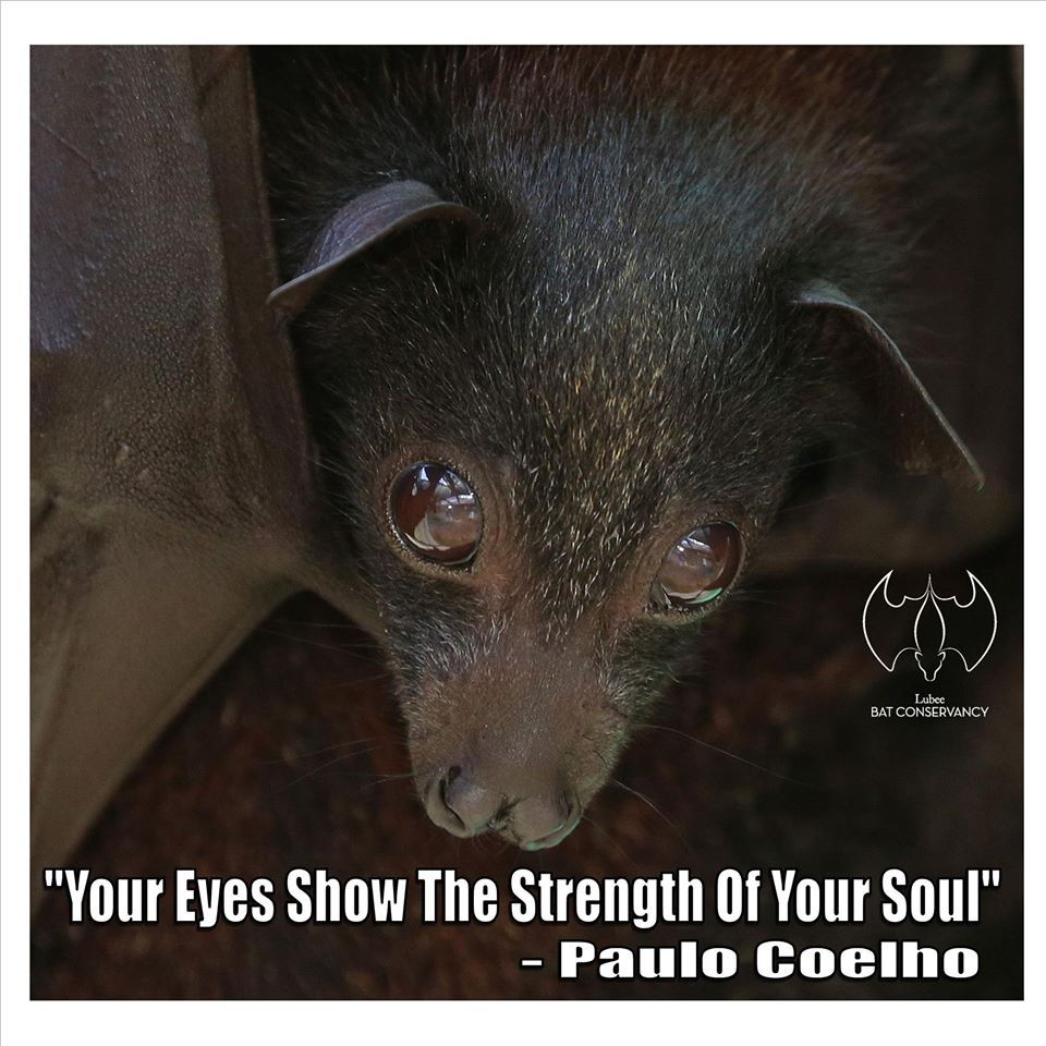 A Month Of Bat Appreciation What Big Eyes You Have There All The