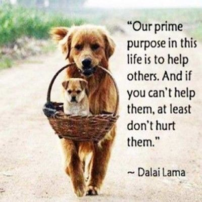 Love Animals Quotes Delectable Pin By Ginger Tang On Great Quotes Pinterest Animal Dalai Lama