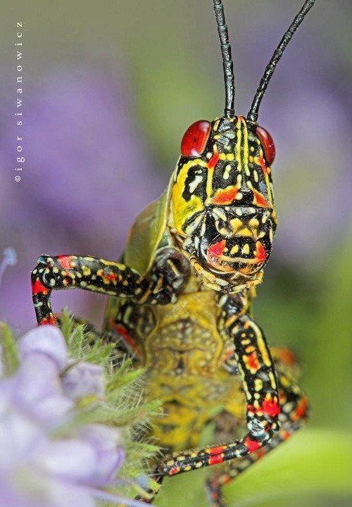 insectos raros del planeta tierra  Taringa  insectos