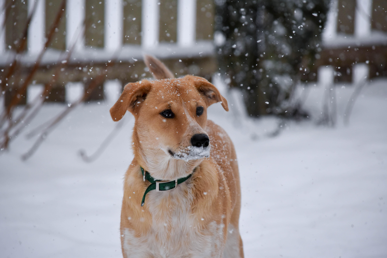 Georgie's first snow!
