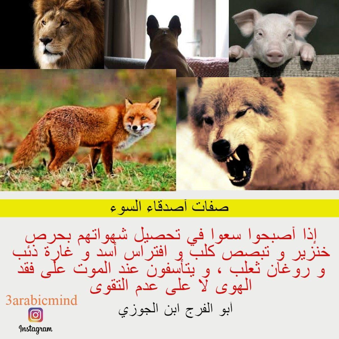 صفات و اضرار أصدقاء و رفاق السوء عند ابن الجوزي Arabic Quotes Arabic Words Pics