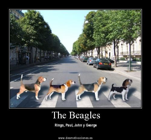 The Beagles Crossing The Abbey Road In London Beagle Cosas Para