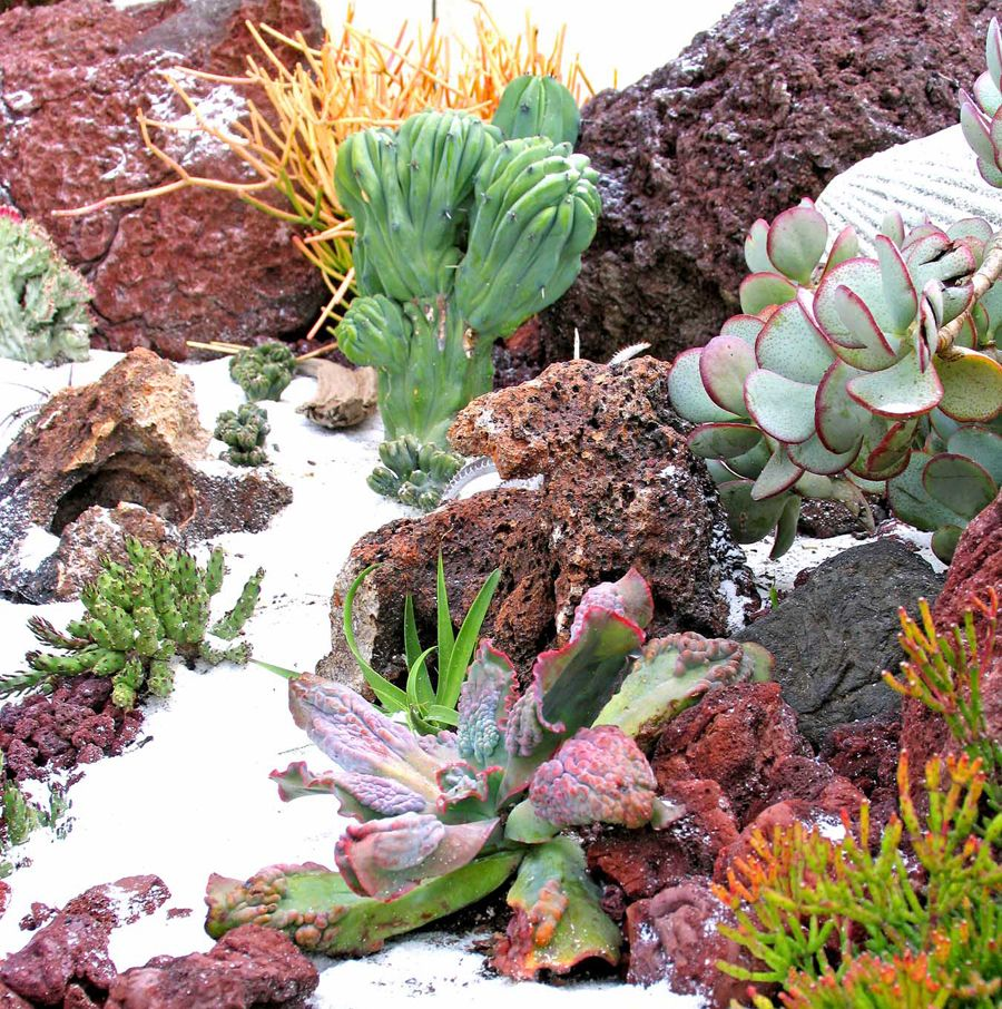 Succulent landscape design i like the white sand idea for Garden design using succulents