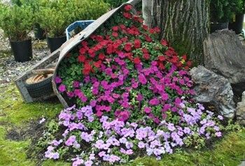 Overturned Wheelbarrow Planter Wheelbarrow Garden Garden Flower