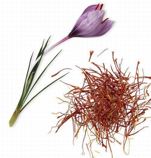 Saffron A Spice Grown Worldwide Is Derived From The Saffron