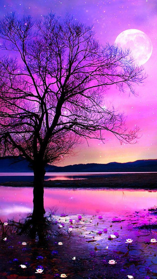 Pink Romantic Night Beautiful Nature Wallpaper Beautiful Wallpapers Nature Wallpaper