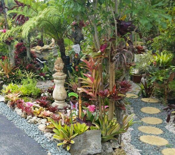 Tropical Backyard Ideas Australia: Bromeliads. .. Bromeliad Retreat. .. Fireball...Australian