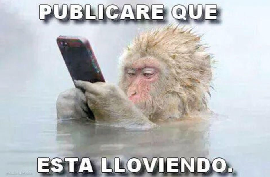 Funny Monkey Meme In Spanish : Hysterical fishing memes all fisherman can relate to