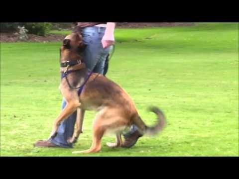 Dog Trainer Taranaki Nz 0211444368 Dog Training Auckland New Zealand Youtube Dog Trainer Dog Training Dog Owners