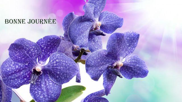 foto de Bonne journée !   Orchidées pourpres, Papier peint à fleurs