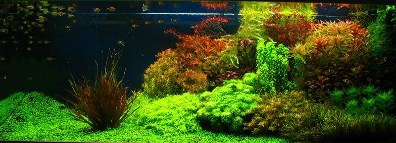 Genial Aquascape Aquarium   Freshwater Aquarium Plants For Beginners
