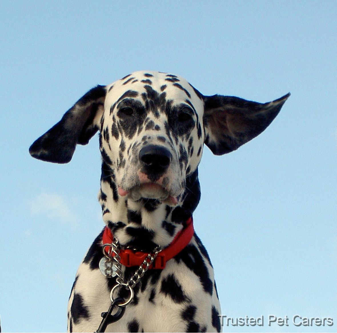 10 Most Pet Friendly Hotels Pet Friendly Hotels Pet Friendly Pets