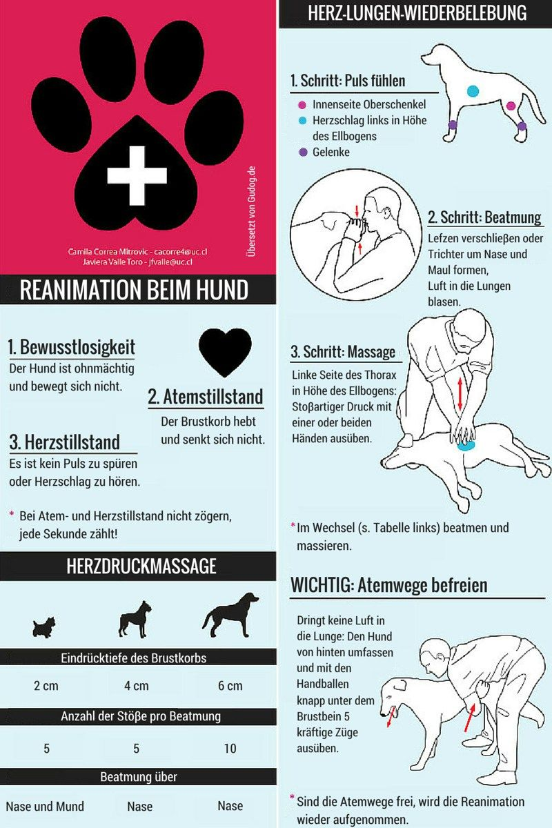 Photo of Knowledge of the measures in first aid for the dog, so that in an emergency …