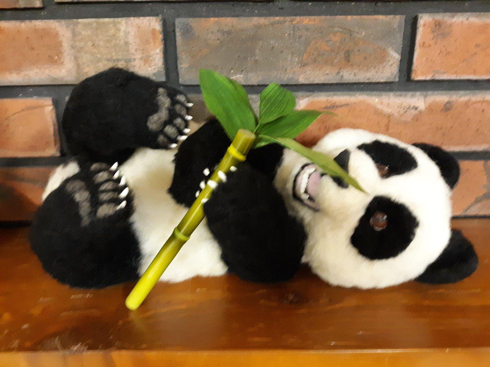Panda Bear Baby Panda Needlefelted OOAK Wool Sculpture #babypandabears