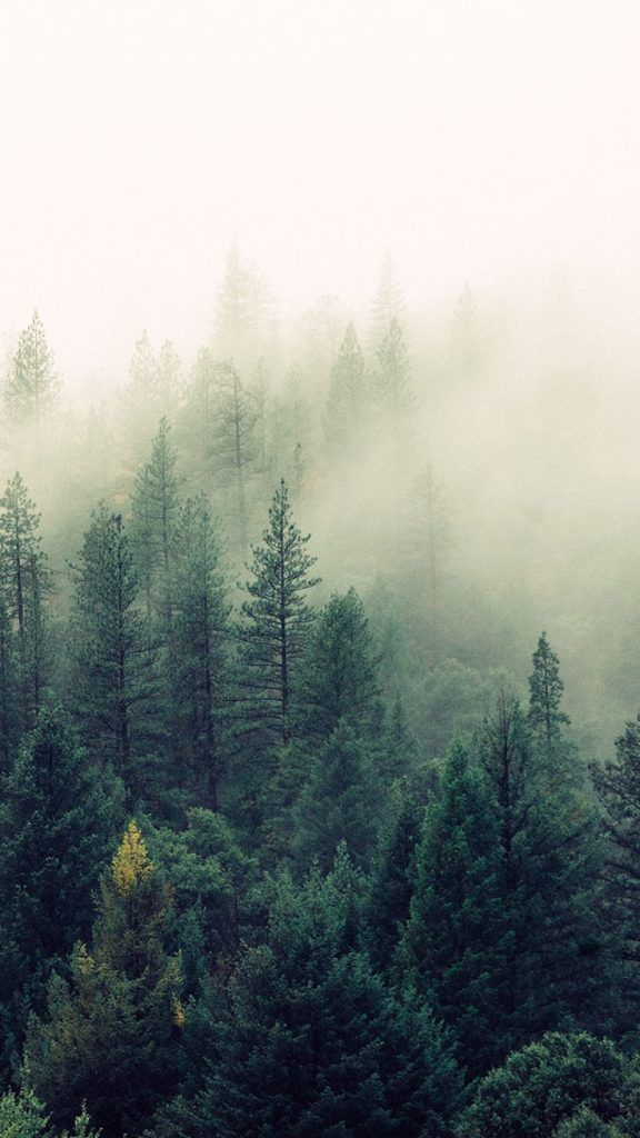 16 Adventurous Forest Mountain Iphone 7 Wallpapers Nature Iphone Wallpaper Nature Inspiration Foggy Forest