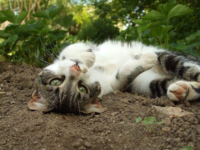 Succesvol Katten Uit Je Tuin Verjagen Afschrikken Of Weglokken